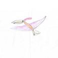 07064306s 昆虫と恐竜(彩色)①
